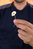 Man holds in a hand small white daisy. Guesses on camomile for love Stock Images