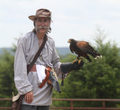 Man holds a hawk during a falconry demonstration Royalty Free Stock Photo