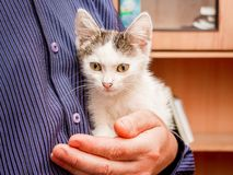 The man holds on his hands a small white spotted kitten with great expressive eyes.  stock images