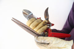 Man holds old, rusty garden tools. A workman holds used, rusty tools in his gloved hands Stock Image