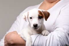 Man holds a puppy in his hands royalty free stock image