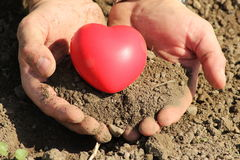 Man holds red heart in palms Stock Photos