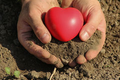 Man holds red heart in palms Stock Images