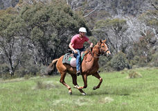 Man and horse. Horse ridding in the green outback Royalty Free Stock Image