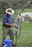 Man and horse stock photos