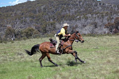 Man and horse. Horse ridding in the green outback Stock Photo