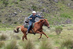 Man and horse. Horse ridding in the green outback Stock Images