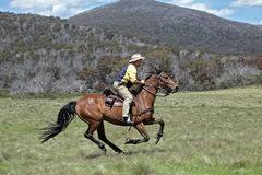 Man and horse. Horse ridding in the green outback Stock Photos