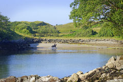 Man on horse at beach in Killybegs, West Ireland. A beautiful, colourful, peaceful picture of a man on a horse in the water at the shoreline of Roshin Port near royalty free stock image