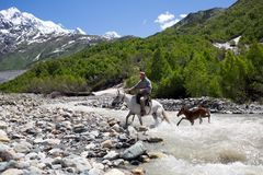 Man on a horse crossing a river in Georgia. Man on a horse crossing a river in Caucasus mountains in Svaneti, Georgia royalty free stock image
