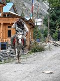 Man on horse in Dhikur Pokhari village, Nepal. Annapurna circuit, Marsyangdi river valley, Nepal royalty free stock photos