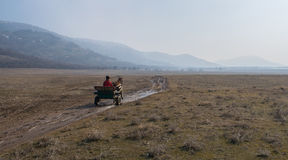 A man in horse drawn cart on spring season day with fog above mountains Stock Photography
