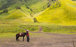 Man with horse. Man with his horse at Savana, Bromo Stock Image