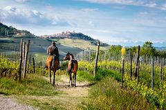 Man on a horse rides among beatiful Barolo vineyards with La Morra village on the top of the hill. Trekking pathway. Viticulture,. Langhe, Piedmont, Italy stock photography