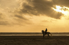 Man horse riding on the beach Royalty Free Stock Images