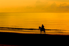 Man with Horse on Seacoast royalty free stock image