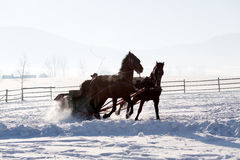 Man in a horse sledge outdoor Royalty Free Stock Image