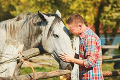 Man with horse. Young man stroking horse at the farm in summer day Stock Photography