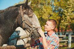 Man with horse. Young man stroking horse at the farm in summer day Royalty Free Stock Photo