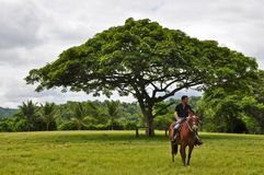 A man on horseback Royalty Free Stock Photos