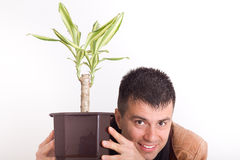 Man with house plant Stock Image