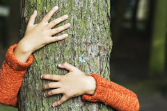 Man hugging a big tree - love nature concept.  stock images