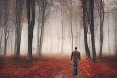 Man i en dimmig skog under höst Royaltyfria Bilder