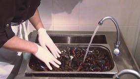 Man i handskar som blandar rengjorda musslor under strålen av rent vatten i durkslag Restaurangkök arkivfilmer