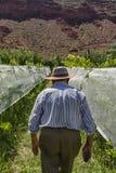 Man i hans vingård Royaltyfri Foto