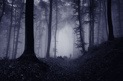 Man i spöklik mörk skog med dimma royaltyfri foto