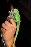 Man and iguana Stock Photo