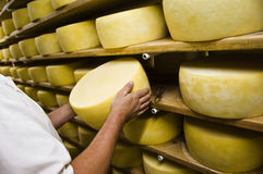 Man inspecting cheese Royalty Free Stock Photos