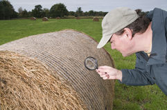 Man inspecting hay bale Royalty Free Stock Photos