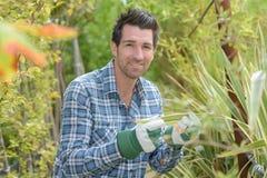Man inspecting leaf plant Stock Images