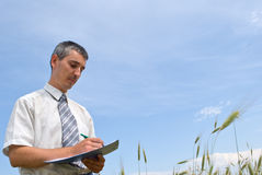 Man inspecting the wheat. Field Royalty Free Stock Photography