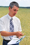 Man inspecting the wheat. Field Stock Images