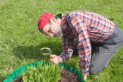 A man inspects the flower stems Royalty Free Stock Images
