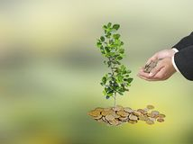 Investing to green business. Man Investing to green business Royalty Free Stock Photos