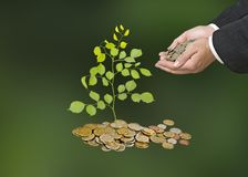 Investing to green business. Man Investing to green business Royalty Free Stock Images