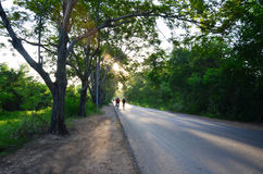 Man jogging in Tree Tunnel Natural Road at Sunset time. A tree tunnel is a road, lane or track where the trees on each side form a more or less continuous canopy Stock Photos