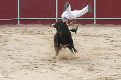 Man jumping on a bull in competition. Spain Royalty Free Stock Photography