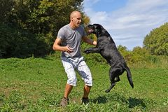 Man is jumping with dog. In the park at sunny day Royalty Free Stock Photography