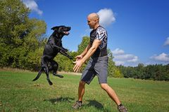 Man jumping with dog. In the park at sunny day Royalty Free Stock Photography