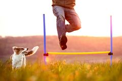 Man jumping over hurdles, young dog running besides, agility and. Sport with the pet Stock Images