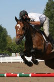 Man jumping Oxer Stock Image
