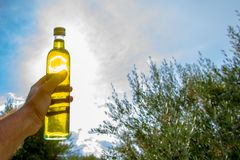 Man keeps against sun a bottle of extra virgin olive oil in an olive tree field. Man keeps against sun a bottle of extra virgin olive oil in an olive tree field Stock Photo