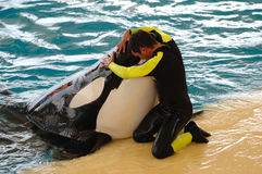 Man and killer whale. Man is hugging a very big killer whale Stock Image