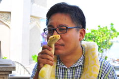 Man kiss an albino snake Royalty Free Stock Image