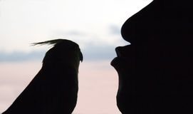 Man kissing bird Royalty Free Stock Photo