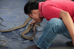 A Man Kissing a Cobra Royalty Free Stock Photo